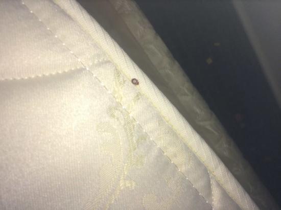 Travelodge Fredericksburg: Cockroaches too!