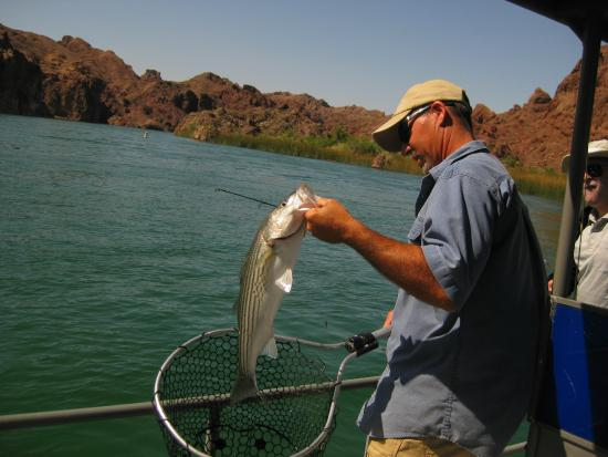 Another bass picture of capt doyle 39 s river excersions for Arizona fishing guides