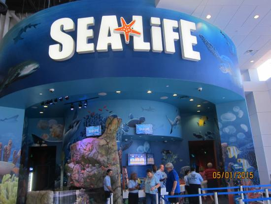 Ticket Counter Picture Of Sea Life Orlando Aquarium Orlando Tripadvisor