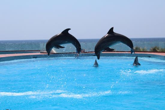 free dolphin show picture of grand sirenis riviera maya resort