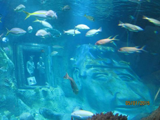 Going Through The Tubes Picture Of Sea Life Orlando Aquarium Orlando Tripadvisor