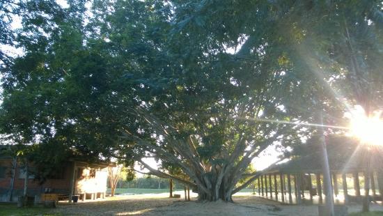 Wat Suan Mokkh