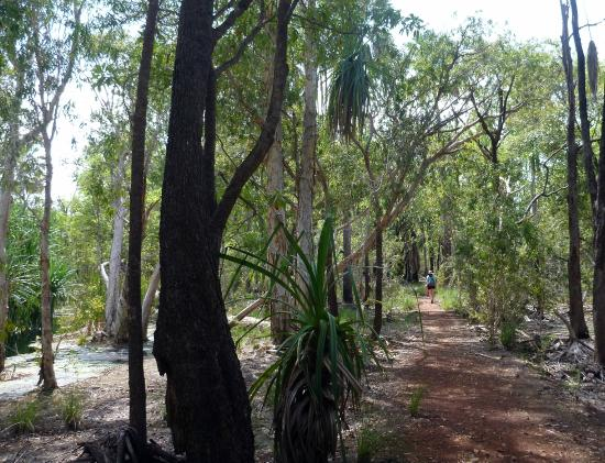 Elsey National Park: Bitter Springs