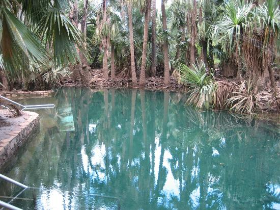 Elsey National Park: Mataranka Thermal Pool