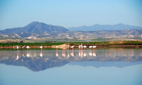 Larnaka City, Cyprus: Larnaka Salt Lake