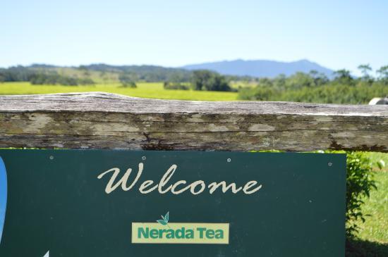 Welcome sign - Picture of Nerada Tea Plantation, Malanda ...
