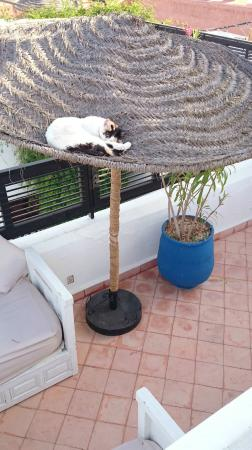 Riad Dar El Aila: it's so relaxing even the cats sunbathe!