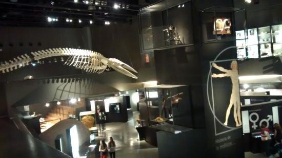 Parque de las Ciencias: Recreación de fósiles