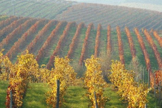 Mombaruzzo, إيطاليا: colline di Ricaldone