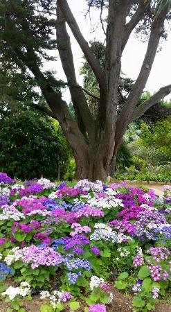 jard botnic marimurtra flores preciosas con arboles majestuosos