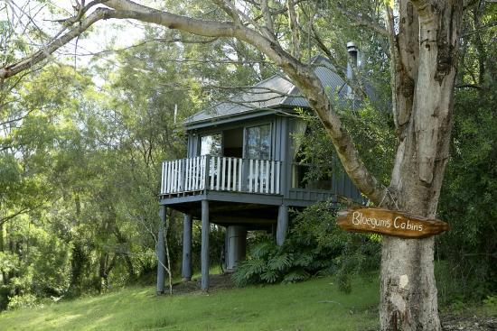 Bluegums Cabins