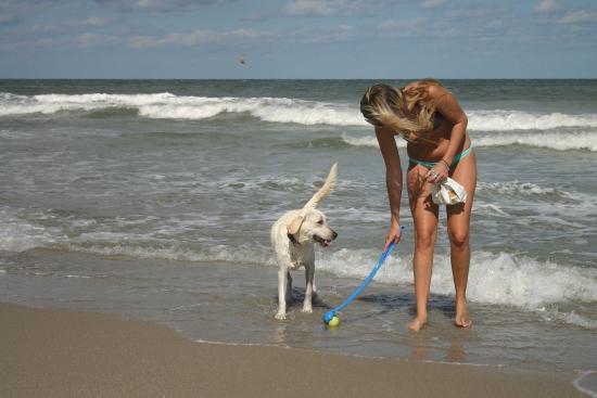 Dog Park Jupiter Beach Fl