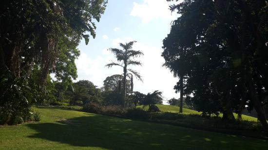 Mt. Edgecombe Golf Lodge: Mount Edgecombe Golf Club grounds