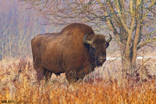 Wild Poland Wildlife Tours