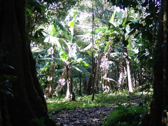 Sunset Hotel Monteverde : Private Forest
