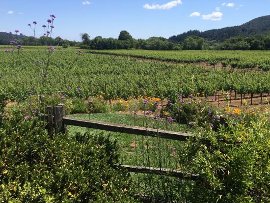 Dutcher Crossing Winery : Outside tasting room