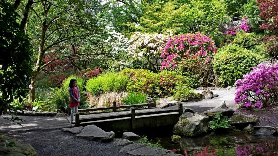 Crystal springs rhododendron garden picture of crystal springs rhododendron garden portland for Crystal springs rhododendron garden