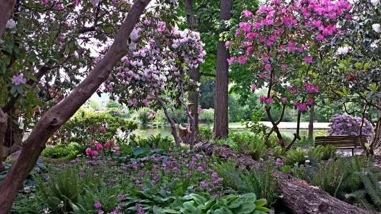 Heritage rhodies wildflowers ferns and hostas picture of crystal springs rhododendron garden for Crystal springs rhododendron garden