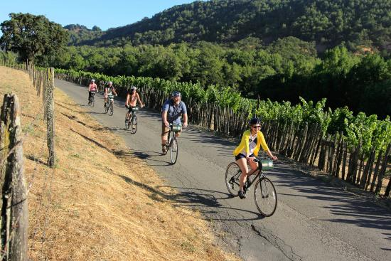 Sonoma Valley Bike Tours & Rentals: Ride Sonoma's quiet, country roads
