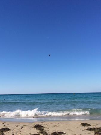 Meelup Beach: Shark alert!