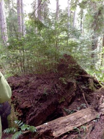 Heritage Forest: New life coming from old