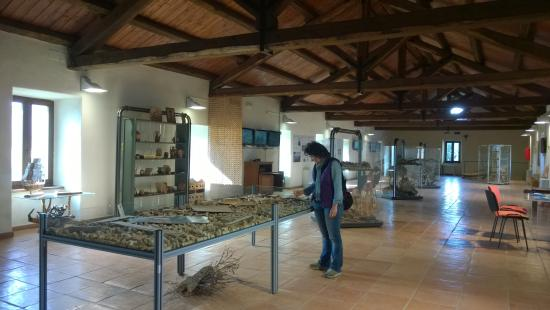 Museo del Sughero