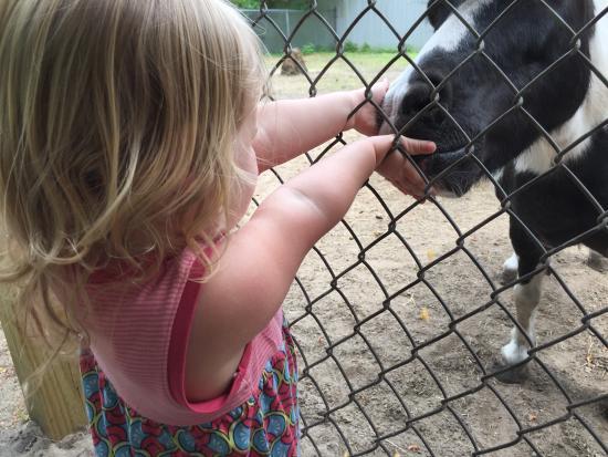 Tregembo Animal Park: Feeding the nay nays