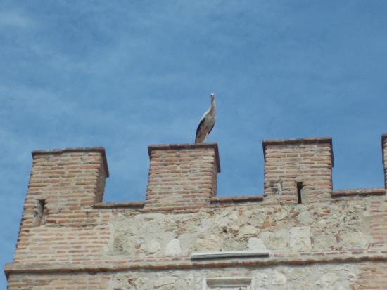 Murallas de la Ciudad: аисты облюбовали защитные сооружения