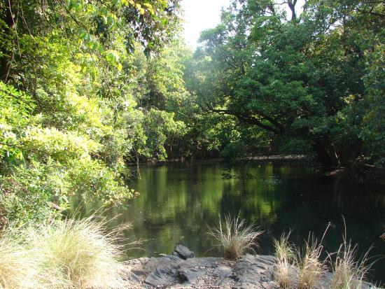 The Hermitage Guesthouse : Experience swimming in the river in the middle of the jungle