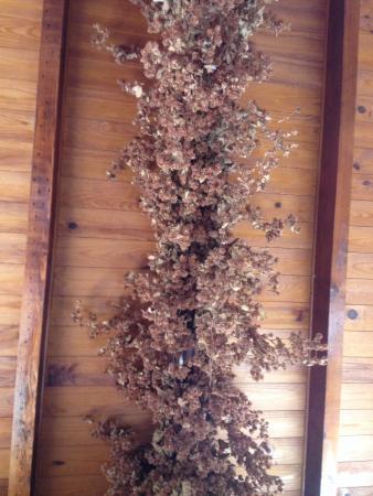 In den Goedendag : Houblon au plafond