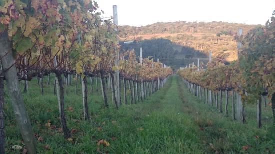 Vinicola Villaggio Bassetti