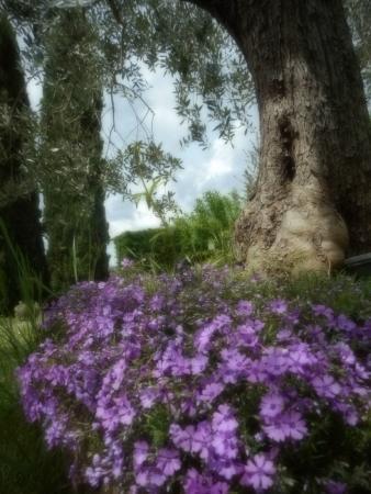 Torre di Ponzano - Chianti area - Tuscany -: Garden of Il Fienile