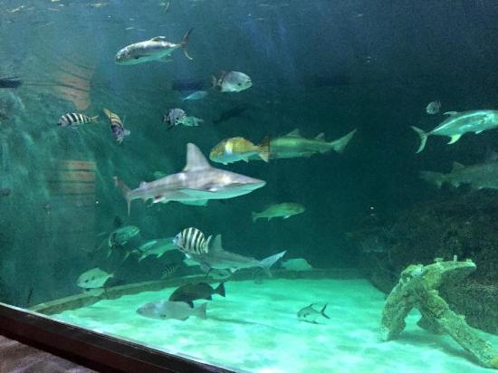 Shark Tank Picture Of North Carolina Aquarium On Roanoke Island Manteo Tripadvisor