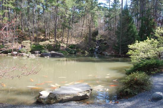 Beautiful flower meadow picture of garvan woodland for Beautiful koi ponds