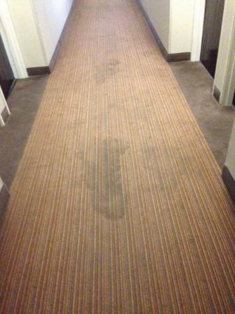 Red Roof Inn New Orleans Airport: Typical Dirty Carpet