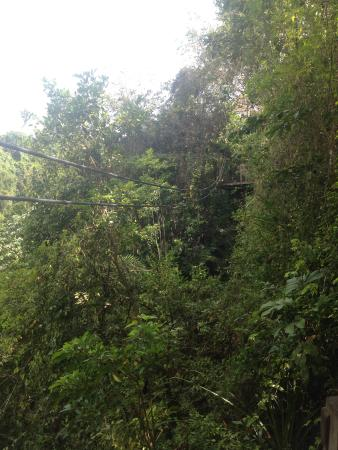 Aerial Trek Zipline Adventures: View from one of the lines.