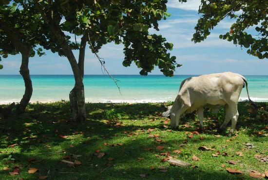 Tripadvisor Bocas Del Toro Panama: Playa De Kusapin, Bocas Del Toro, Panamá