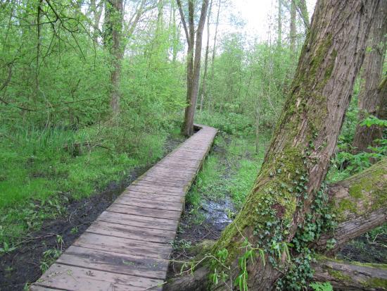 Fletcher Moss Park & Botanical Gardens: Raised Boardwalk over the marsh, through the woods, towards the Mersey