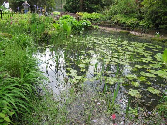 Fletcher Moss Park & Botanical Gardens: Garden Pond