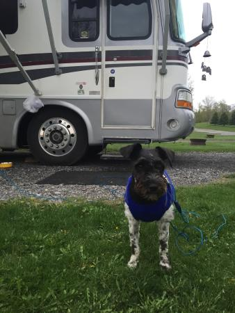 Southwoods RV Resort: Our site guard dog - Jack!