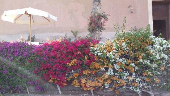 Kasbah Agafay : superbe jardin