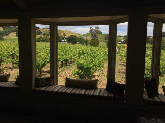 Limerick Lane Cellars: From inside tasting room
