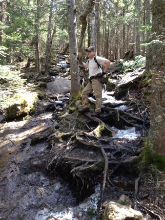 Blue Mountain : Roots and rocks make up most of trail