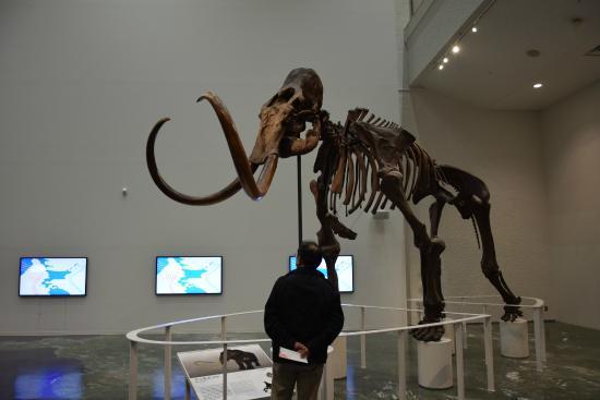 Hokkaido Museum Morino Charenga: エントランスのマンモスゾウ