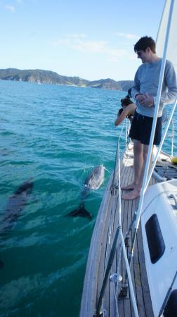 Bay of Islands, نيوزيلندا: Dolphins
