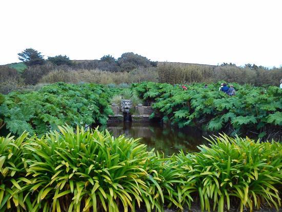 la jasmin grimpant picture of jardin botanique de vauville vauville tripadvisor