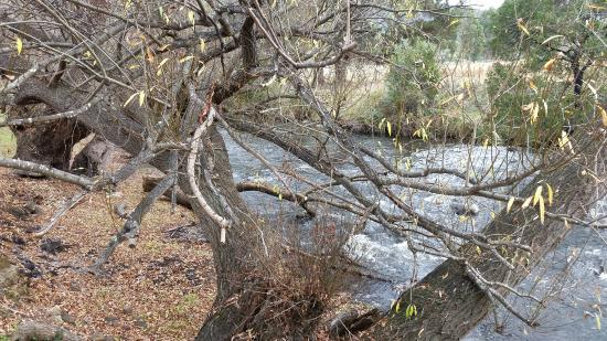 Westerway, أستراليا: The Stream
