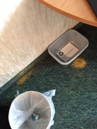 Hotel Circle Inn: bleach stains