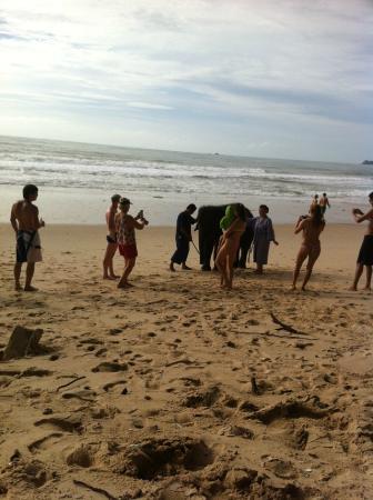 Amora Beach Resort: слоник на пляже