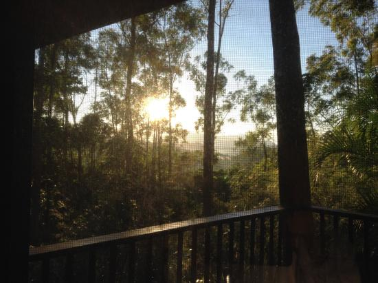 Rose Gums Wilderness Retreat: View from room